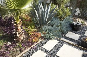 xeriscaping drought tolarant planting